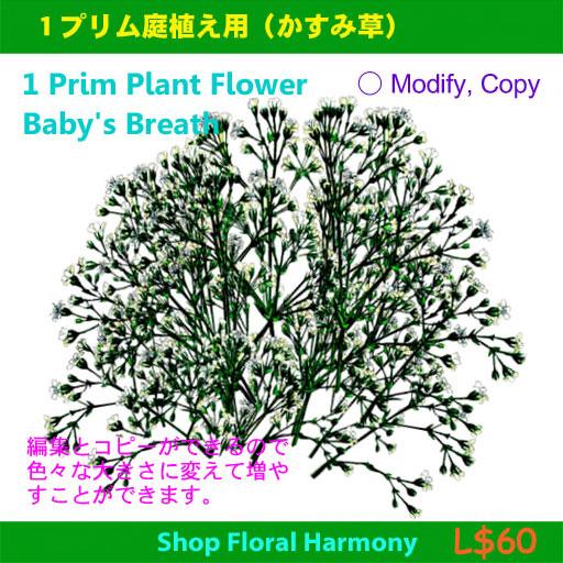 20120502-W11-masami-1_Prim_Plant_Flower.jpg