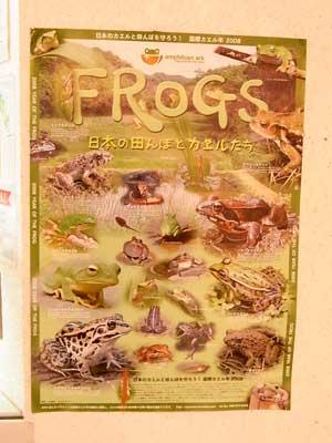 国際カエル年ポスター