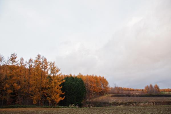 落葉松の紅葉