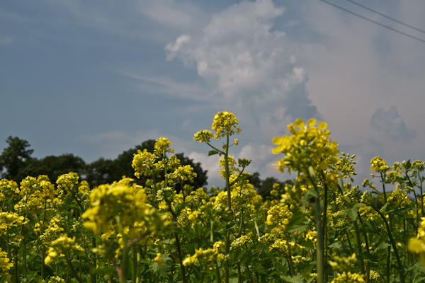 入道雲とキカラシ  大曲湖畔園地