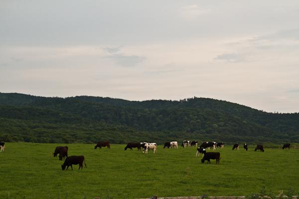 能取岬の牧場