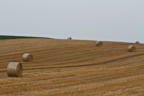 麦藁のロール