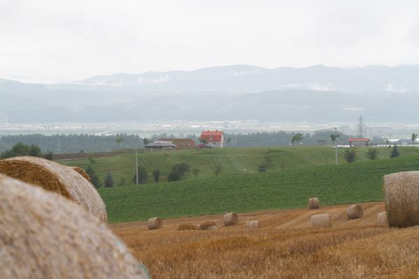 麦藁ロールと赤い屋根の厩舎