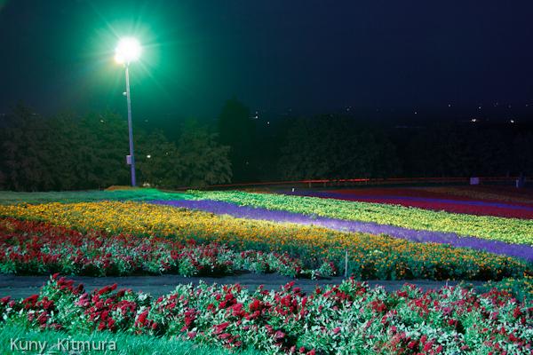 お花畑のライトアップ