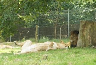 Zoo et Parc de Thoiry