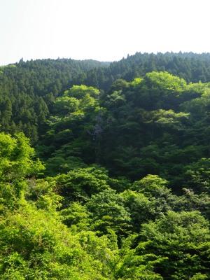 2013.05川苔山
