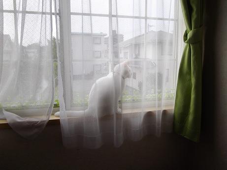 窓際のふきちゃん5