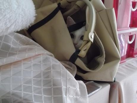 バッグの中で落ち着くふきちゃん1
