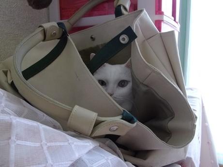 バッグの中で落ち着くふきちゃん2