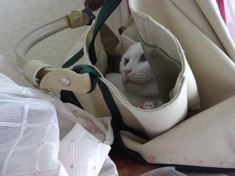 バッグの中で落ち着くふきちゃん3