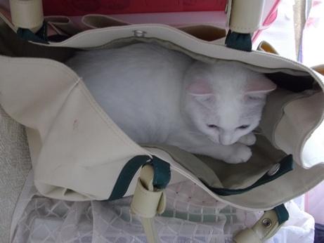 バッグの中で落ち着くふきちゃん4