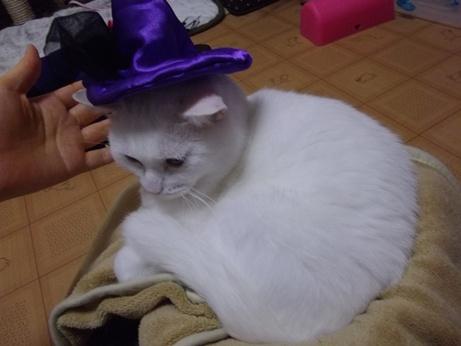 ハロウィンコスふきちゃん2