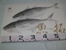 不良中年釣査団-2012-01-03 15.30.42.jpg