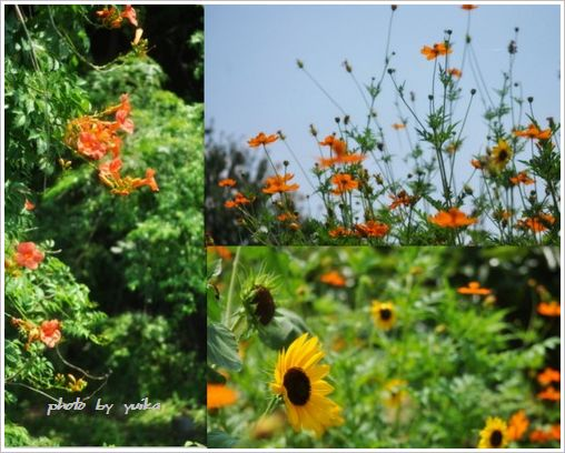 夏の花728-1