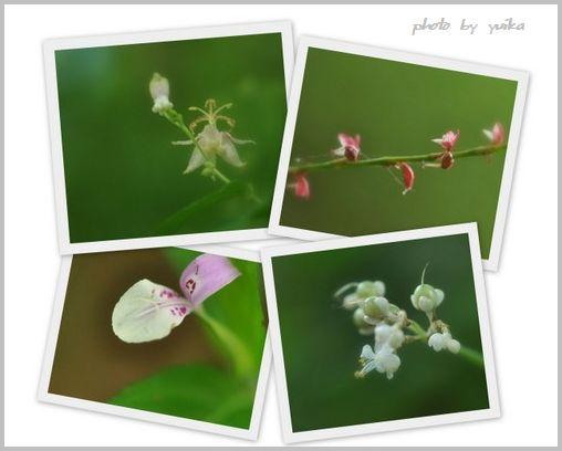 香嵐渓の花819-1