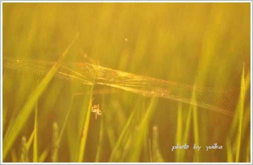蜘蛛の巣825