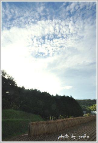 稲刈り908-1