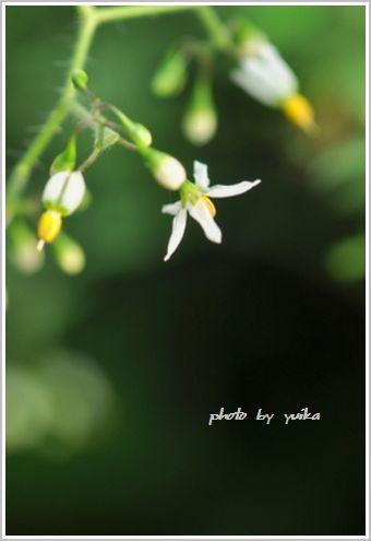 白い花911-3