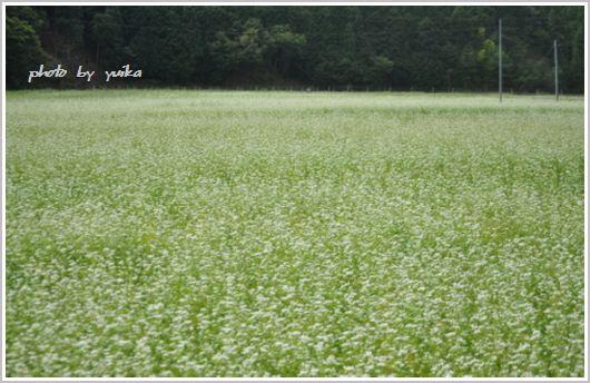 ソバの花917-1