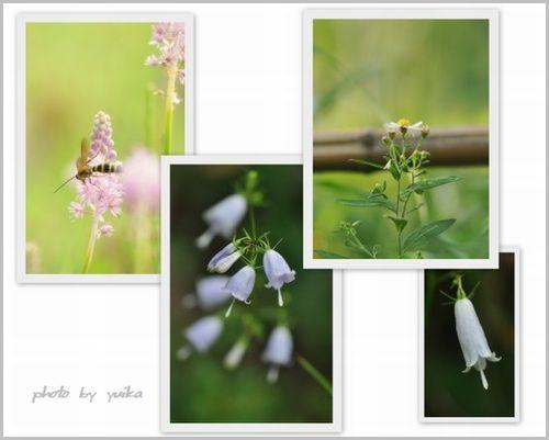 野の花922-1