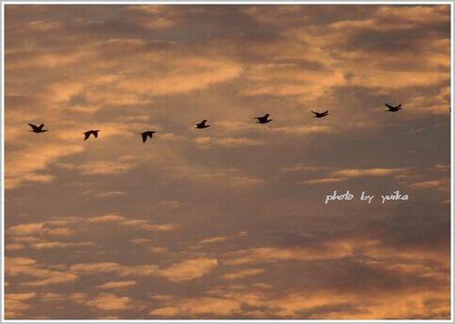 鳥1011-4