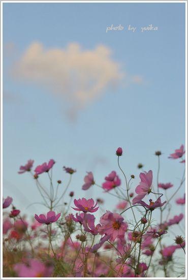 ピンクの雲1022-1