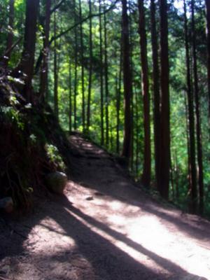 120816植林の木漏れ日