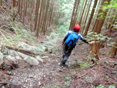 120902杉の植林を下る