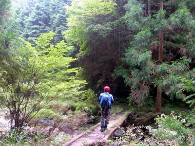 120902杉の林を歩く歩く