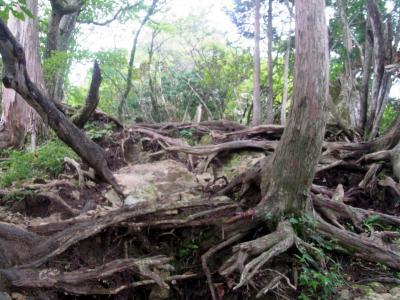 120915尾根の登り 木根の道