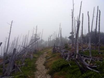 120915立ち枯れの樹ゝの景色