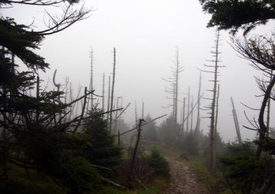 120916立ち枯れの木々
