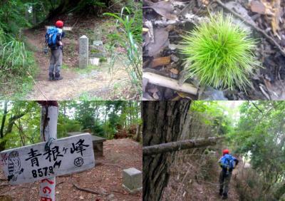 120902青根ヶ峰
