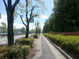 ばかうまラーメンどん 近江八幡店 (11)