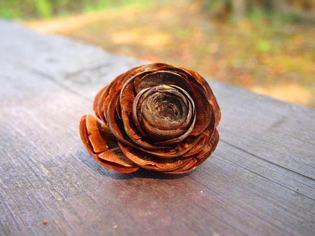 薔薇みたいな松ぼっくりみたいなやつ