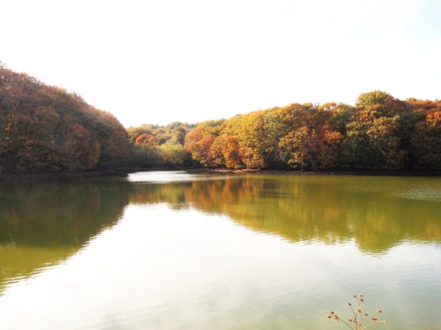 森林公園 (14)