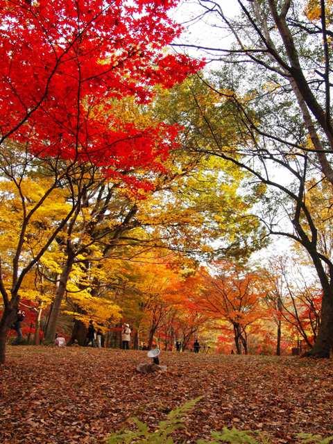 森林公園 (21)