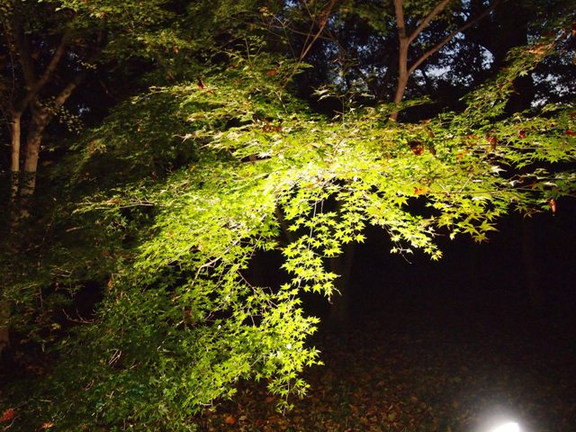 森林公園 (40)