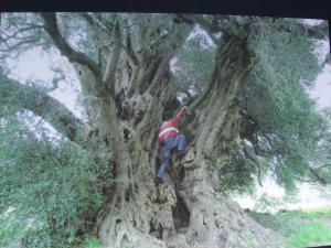 最古の木 7