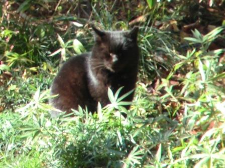 野鳥の森の猫3