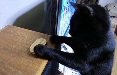猫に小判3