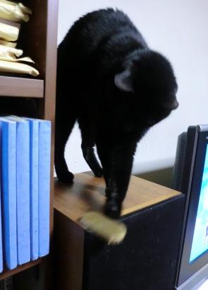 猫に小判4