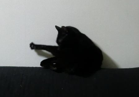 猫のポーズ2