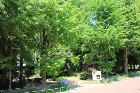滝野川公園1