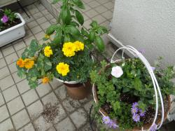 夏の花壇1(縮小)