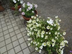 夏の花壇2(縮小)