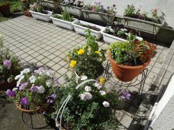 夏の花壇3(縮小)