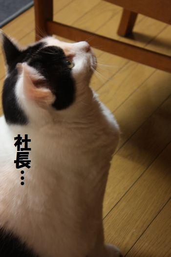 141208shatyou2.jpg