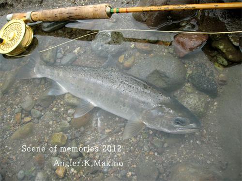 makinoyamame33.jpg