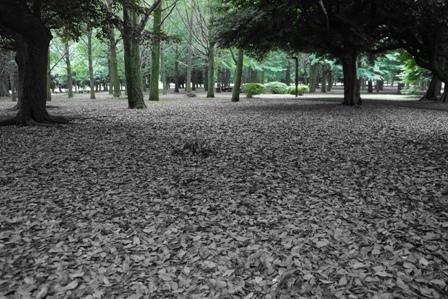 代々木公園の森